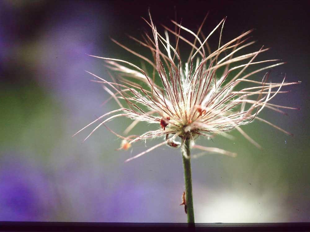 Verborgene (Natur-)Schönheiten, Ausstellung in der Ökologiestation vom 28.10. - 05.12.2010 Foto: Karl-Heinz Kühnapfel
