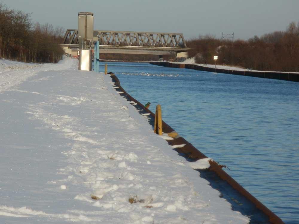 Eisvogel am Datteln-Hamm-Kanal, 15.12.2010 Foto: Volker Heimel