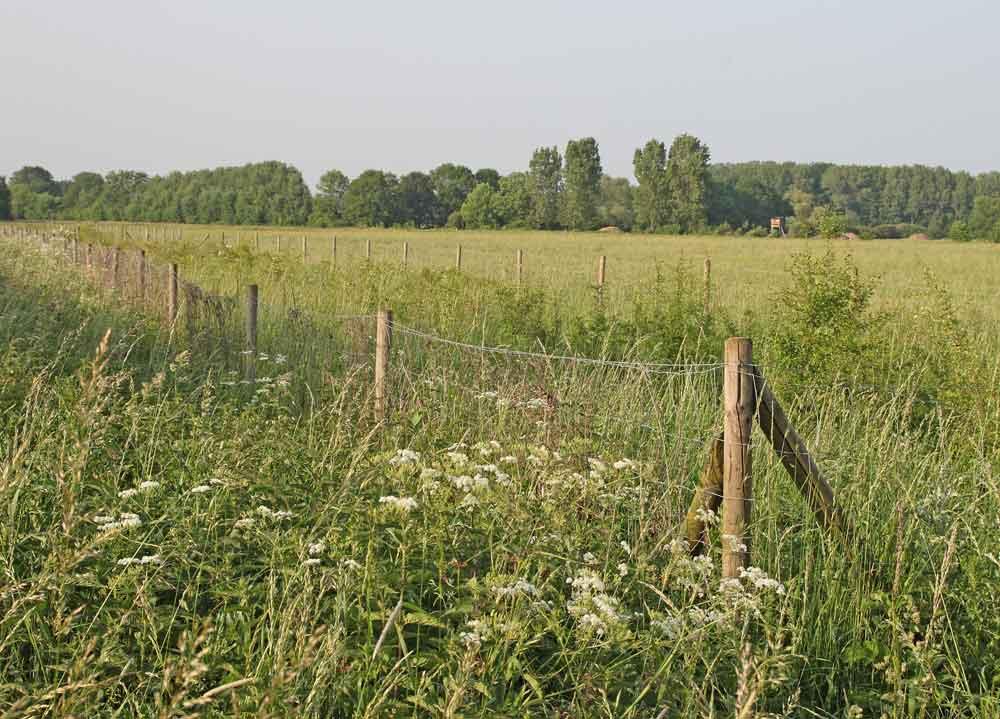 Sich selbst überlassenen Hecke im NSG Hemmerder Wiesen, 07.06.10  Foto: Bernhard Glüer
