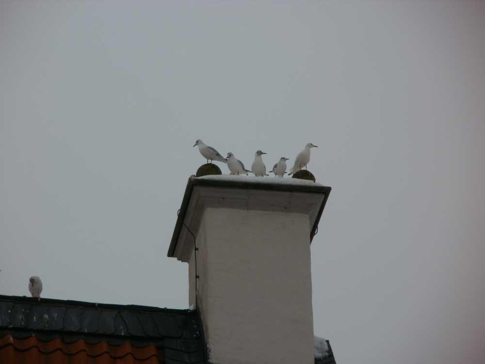 Dortmunder (Rätsel-)Möwe, auf dem Turm die ganz rechte, 28.12.2010 Foto: Volker Heimel