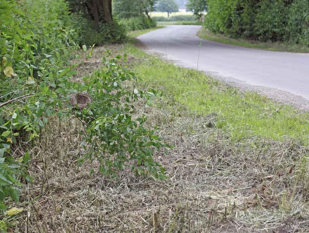 Durch Mulchmahd freigestelltes Grasmückennest in den Hemmerder Wiesen, 18.06.10 Foto: Bernhard Glüer
