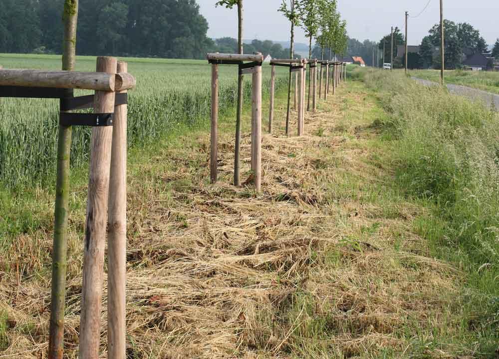 Feldsaum mit `freigeschnittenen´ Laubgehölzen bei Hemmerde-Steinen, 12.06.10 Foto: Bernhard Glüer