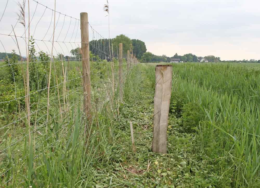 Der Eichenspaltpfahl markiert die Grenze der Schutzfläche - wohlbemerkt: die befindet sich links des Pfahles! 02.06.10 Foto: Bernhard Glüer