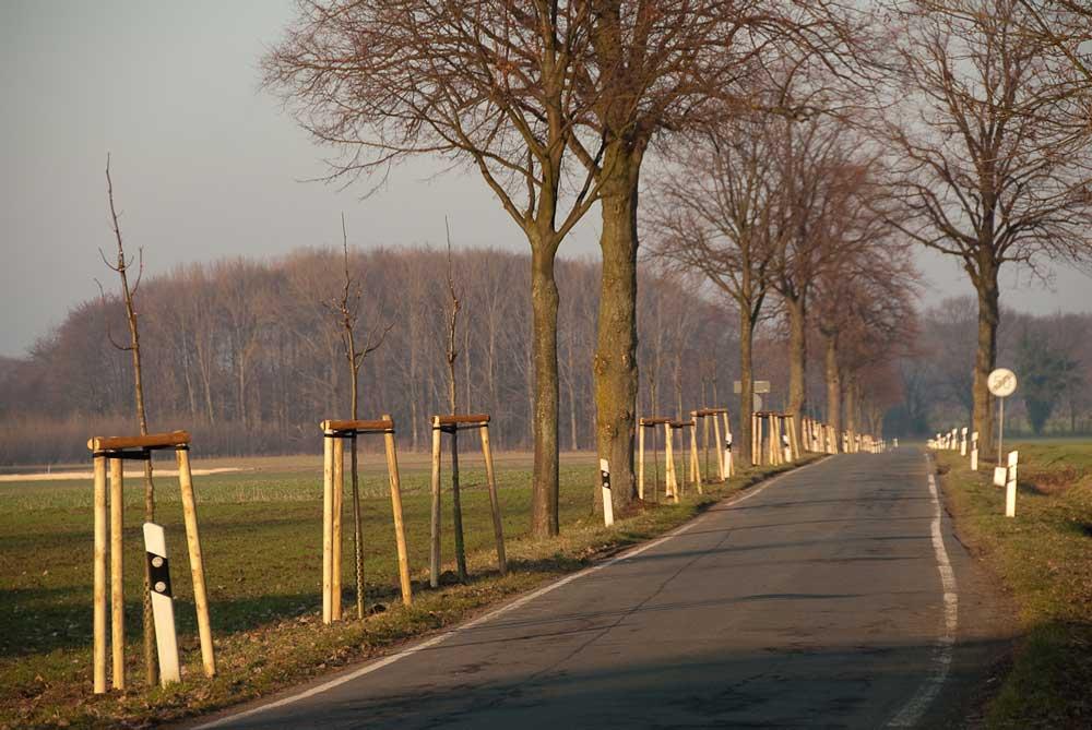 Durch Neuanpflanzungen ergänzte Allee bei Unna-Steinen am 29.01.2011 Foto: Meinolf Stritzek