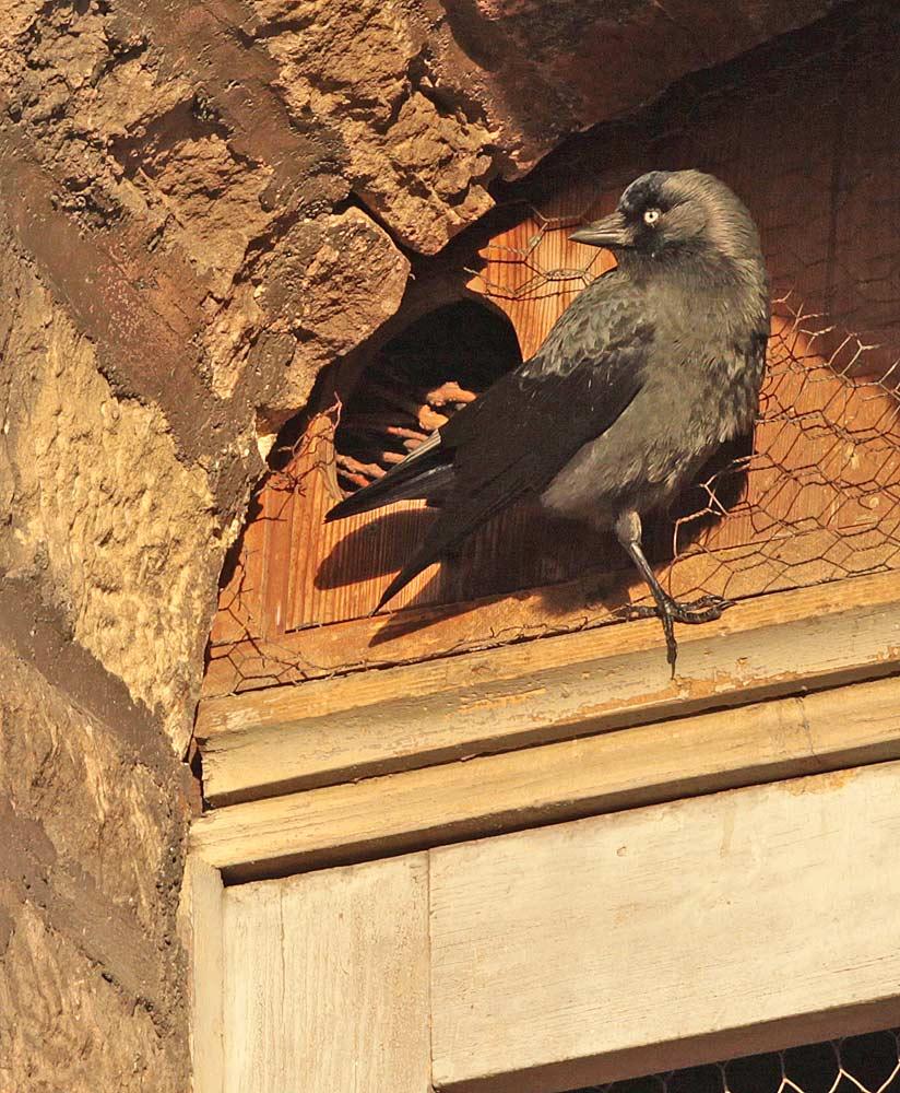 Hier wird ein Nistkasten hinter einem Turmfenster inspiziert, 28.12.2011 Foto: Bernhard Glüer