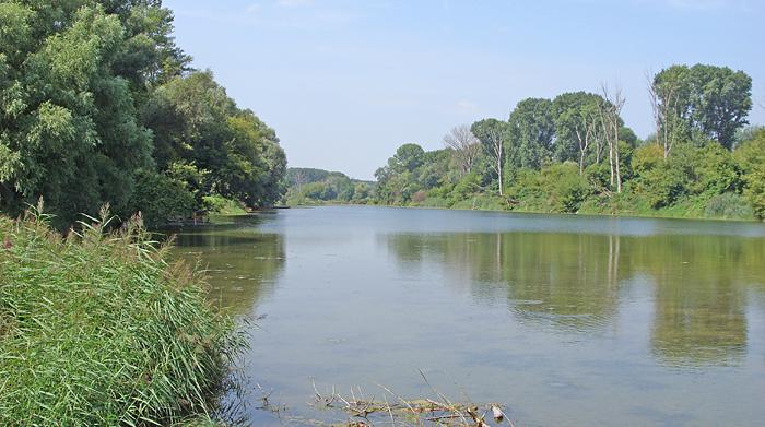 Urlandschaft mit paradiesischer Natur - Donau-Aue bei Wien, 03.08.2011, Foto: Petra Glüer