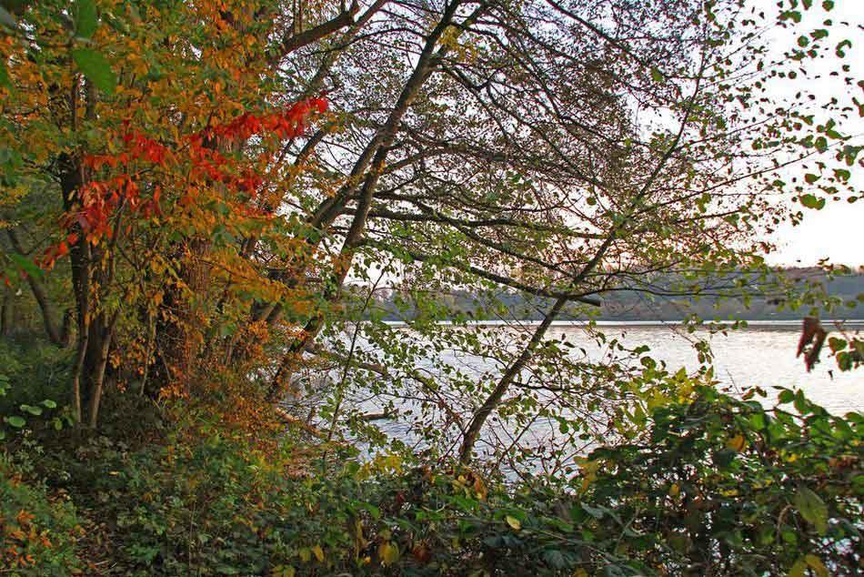 In der Morgensonne leuchtet das Herbstlaub am See am 01.11.11 Foto: Gregor Zosel
