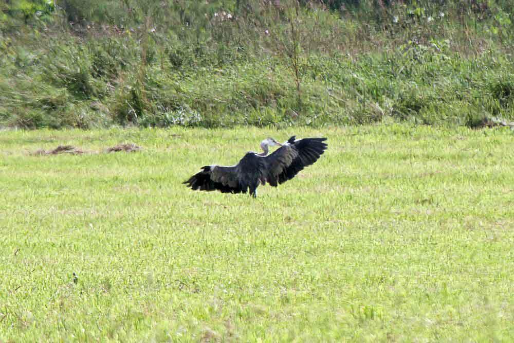 Wenn dann ein kühler Wind durch die Federn zieht..... am 23.08.11 Foto: Gregor Zosel