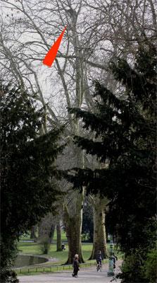 Besetzter Habichthorst in einem stark frequentierten Kölner Park Foto: Hermann Knüwer