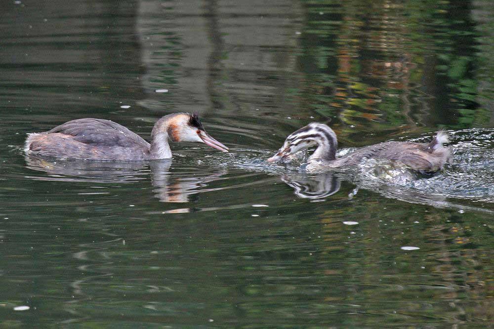 Schon hat der Fisch den Besitzer gewechselt....am 27.09.11 Foto: Gregor Zosel