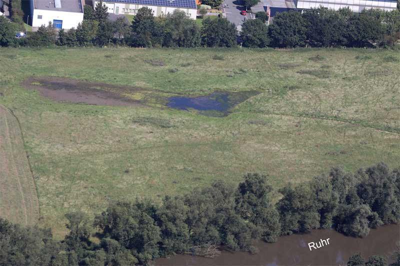 Während andernorts in den Auen Wassermangel herrschte, waren in der Kiebitzwiese immer noch Flachgewässer vorhanden; Aufnahme nach der vorübergehenden Einstellung der Bewässerung. Foto: Gudrun Goßmann
