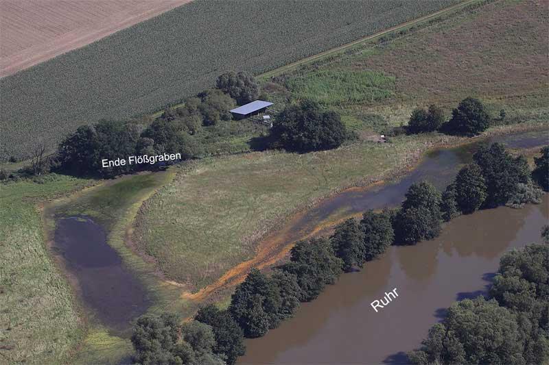 Durch die Einleitung von Wasser in die Aue entstanden große Flachgewässer, die schnell von gewässertypischen Tierarten besiedelt wurden. Foto: Gudrun Goßmann