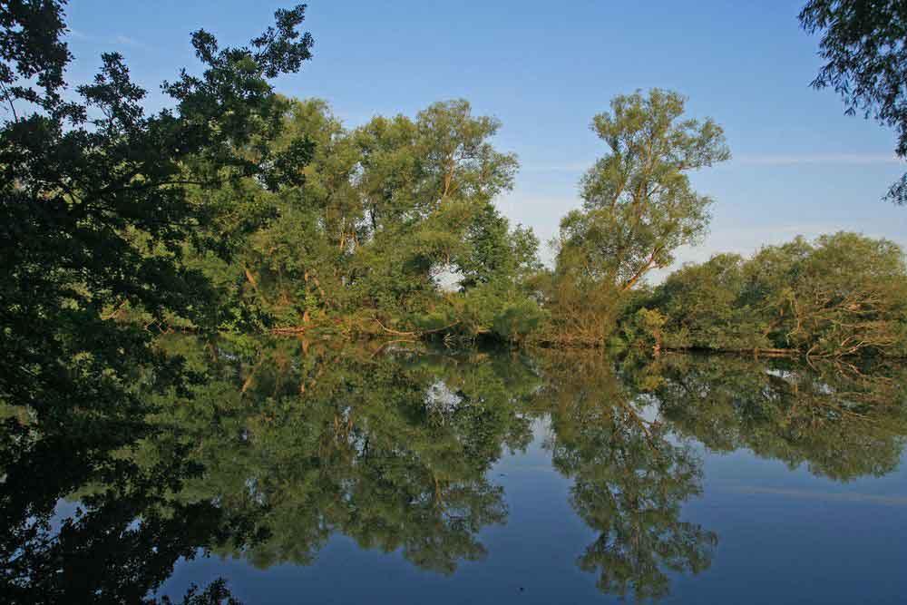 Blick vom Ufer des Ententeich auf die Sperrzone des NSG Kiebitzwiese am 28.06.11 Foto: Gregor Zosel