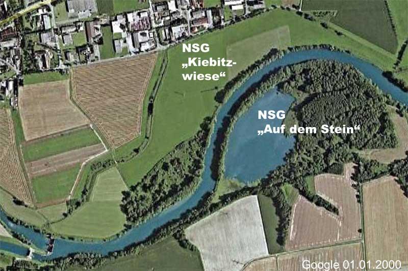 Das NSG `Kiebitzwiese´ vor Durchführung der Vernässungsmaßnahmen. Foto: Google (bearbeitet: H. Knüwer)