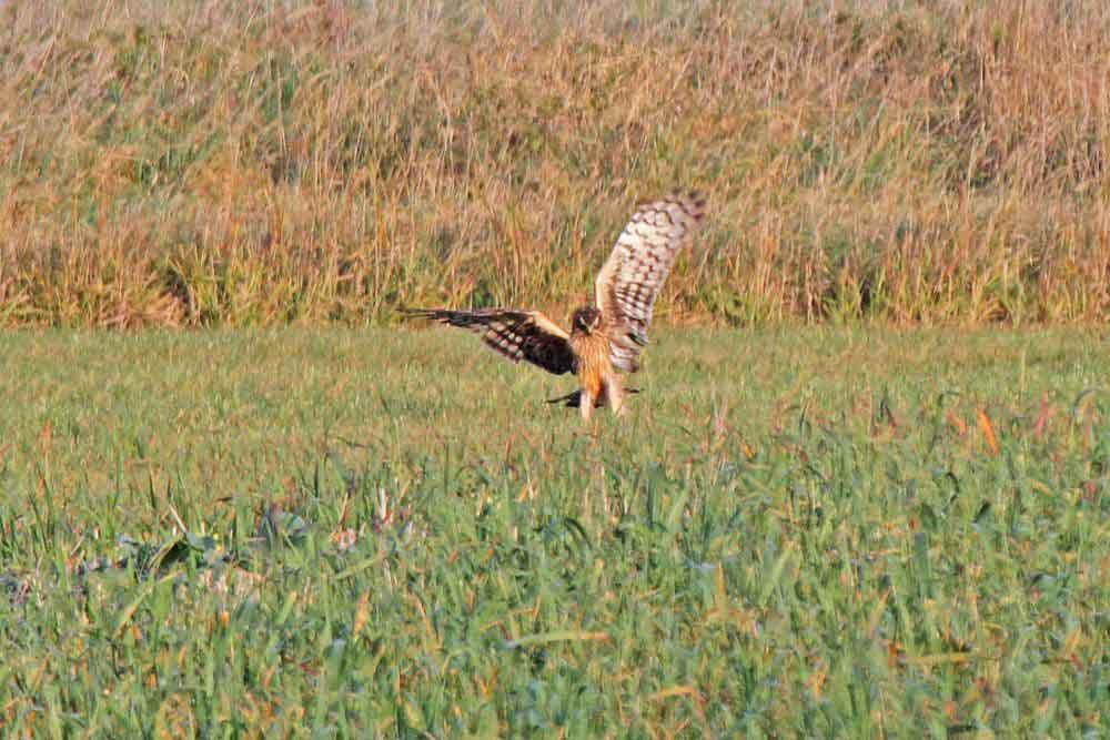 Endlich war die Jagd erfolgreich am 01.11.11 Foto: Gregor Zosel