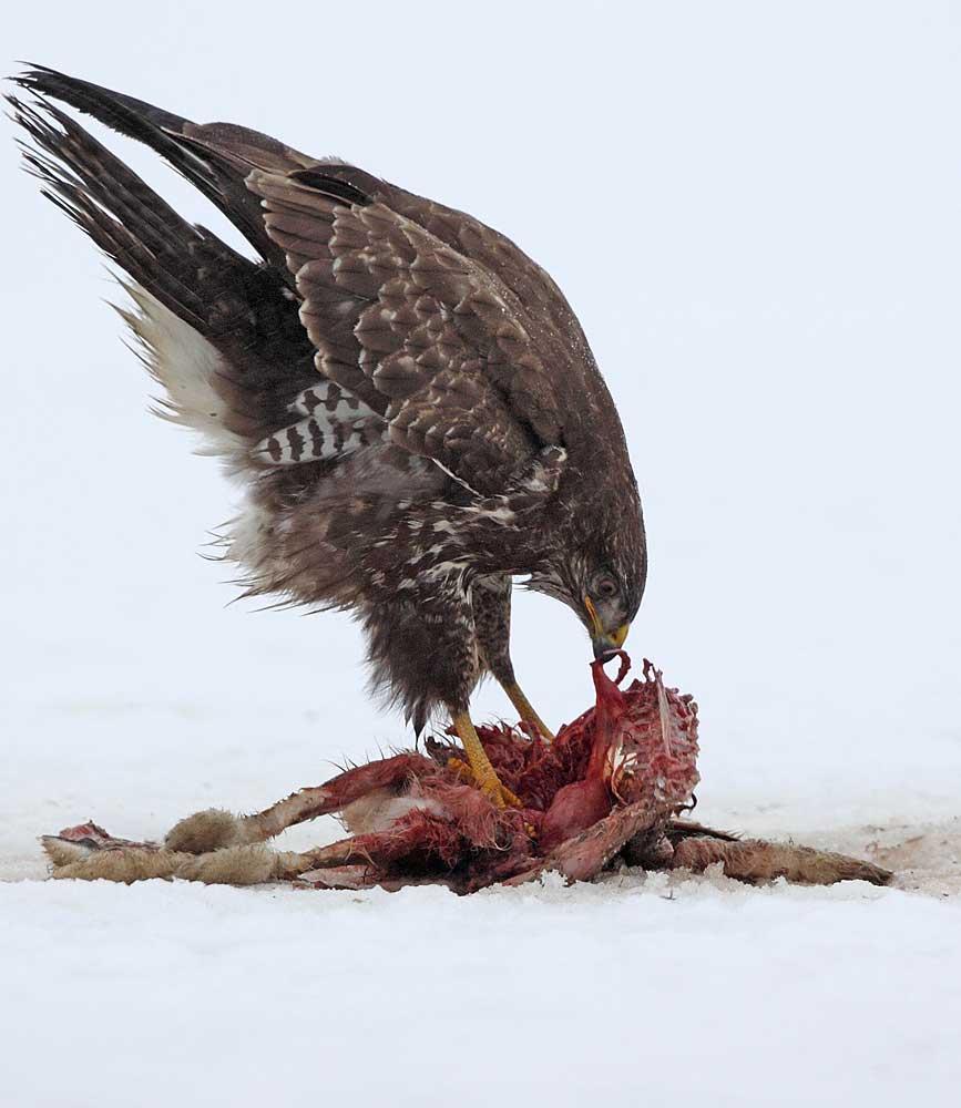 .... wenn die Mahlzeit sich lohnen soll! 01.01.11 Foto: Bernhard Glüer