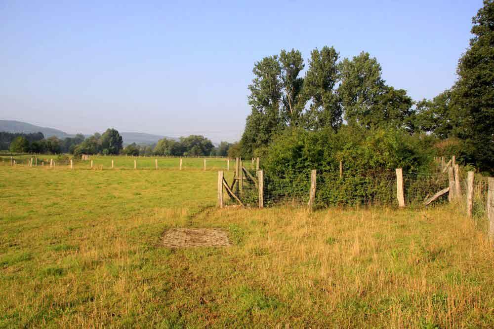Lebensraum des Neuntöters im NSG Obergraben westlich Wickede am 04.08.11 Foto: Gregor Zosel