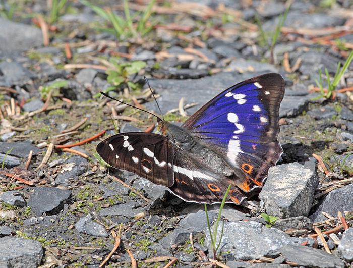 ...demonstriert er den Hintergrund..., 13.06.2011, Foto: Bernhard Glüer