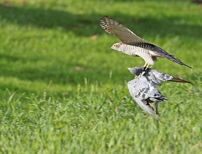 Kaum zu glauben, dass sich dieses `Gespann´ in der Luft halten kann..., 06.09.2011, Foto: Bernhard Glüer