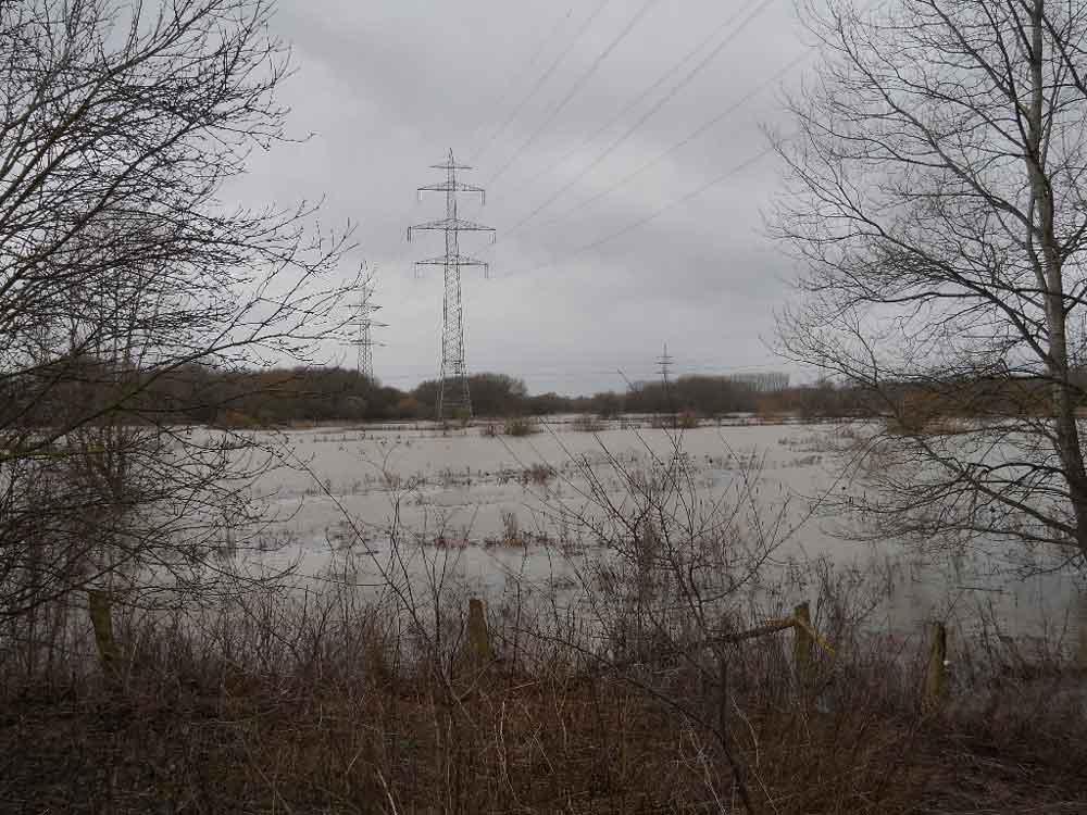Lippehochwasser am Hufeisen im NSG Tibaum bei Hamm, 15.01.2011 Foto: KlauN Werne