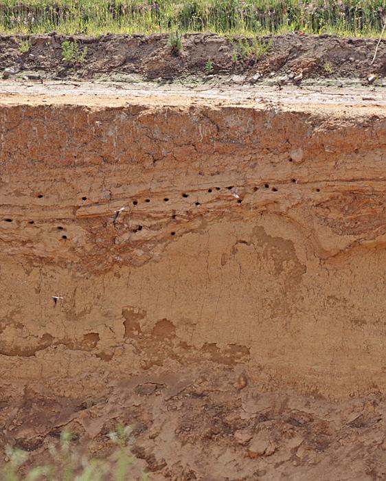 Uferschwalbenkolonie in der Tongrube bei Frdbg.-Ardey, 12.06.2011, Foto: Bernhard Glüer