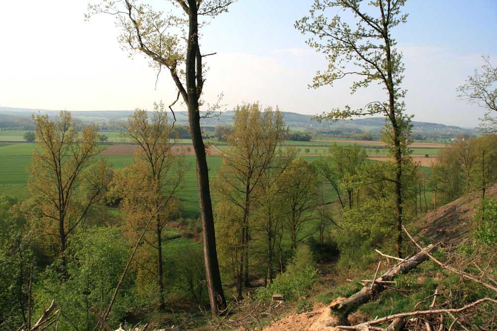 Blick vom Kahlschlag bei Bentrop in das Warmer Löhen. Am Fuß des Hanges ist das Revier des Feldschwirls zu erkennen, 21.04.2011 Foto: Gregor Zosel