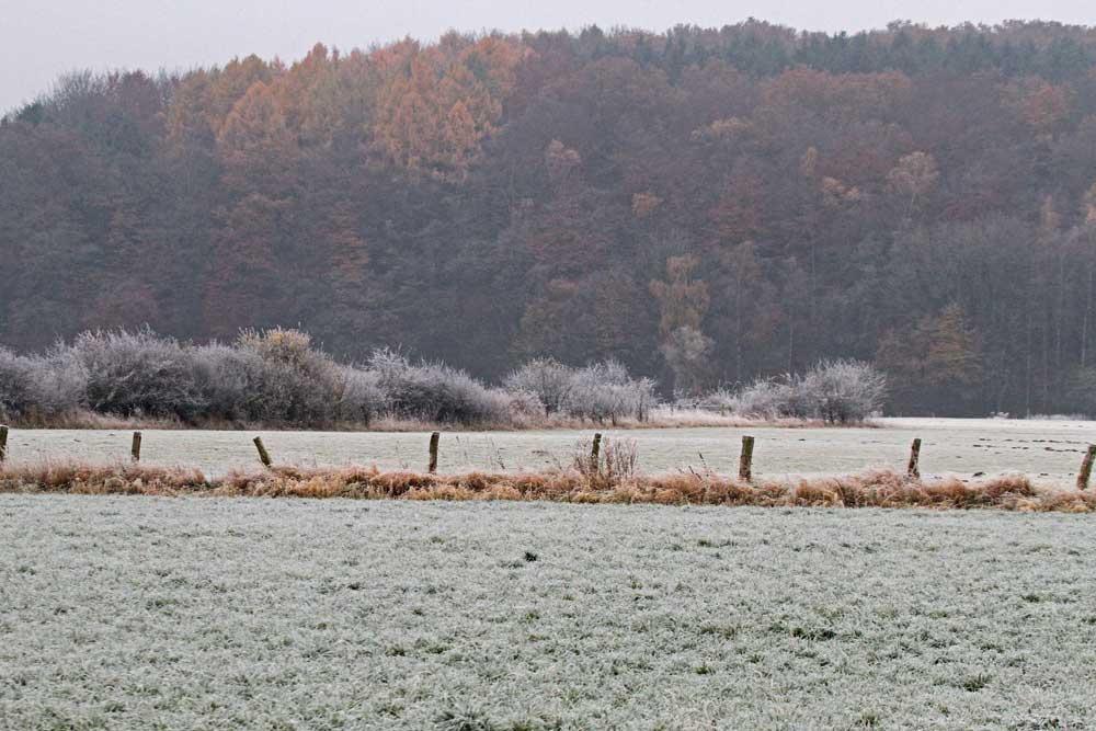 Ein typischer Novembertag mit Nachtfrost im Altendorfer Ruhrtal..am 15.11.12 Foto: Gregor Zosel
