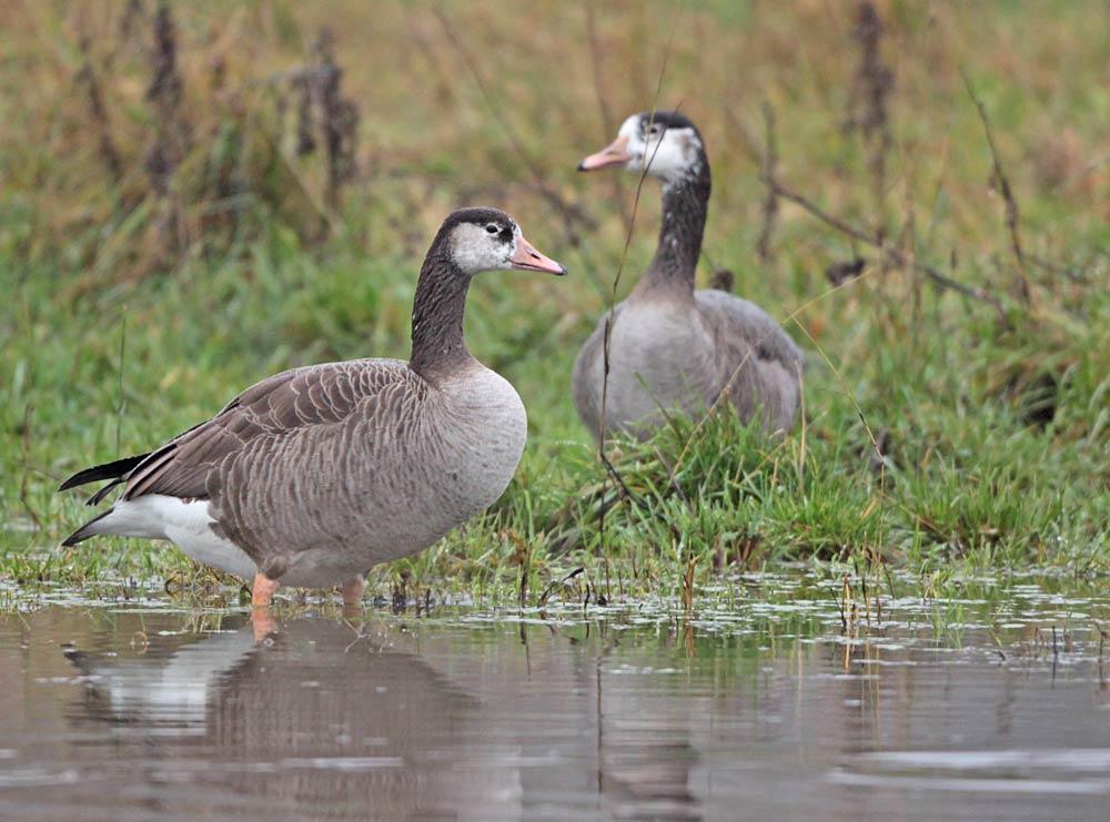 ...möglicherweise Geschwister von demselben Mischpaar, 18.11.2012 Foto: Bernhard Glüer
