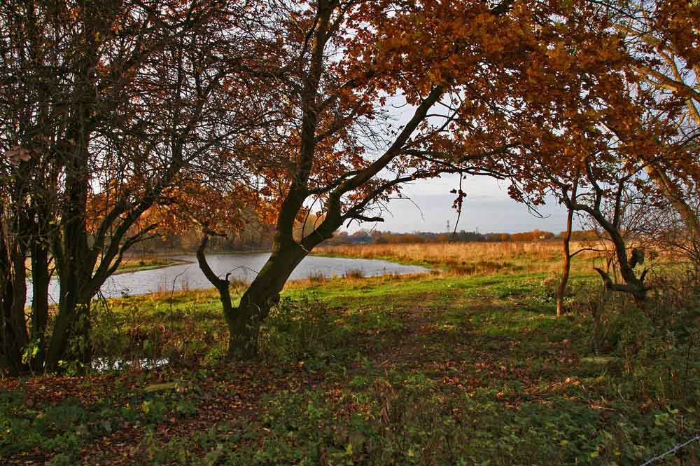 Herbststimmung an der Kiebitzwiese...am 12.11.12 Foto: Gregor Zosel