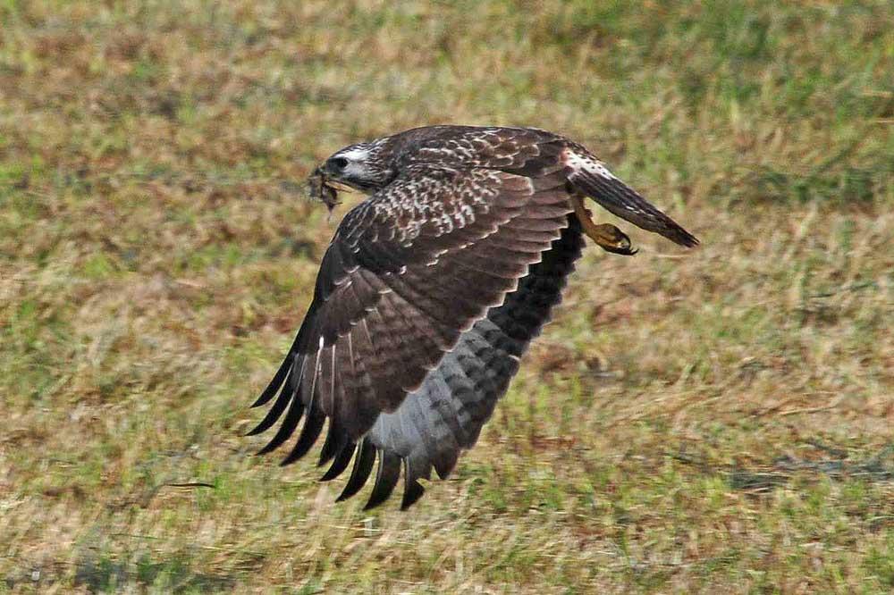 Hier war die Jagd erfolgreich...am 07.09.12 Foto: Marvin Lebeus