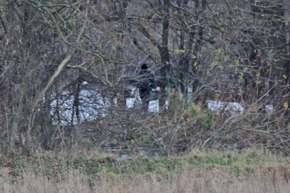 Schwanenjagd am Mendener Ententeich. Erfurchtslos wird der Kadaver am Ufer entsorgt...am 23.11.12 Foto: Gregor Zosel