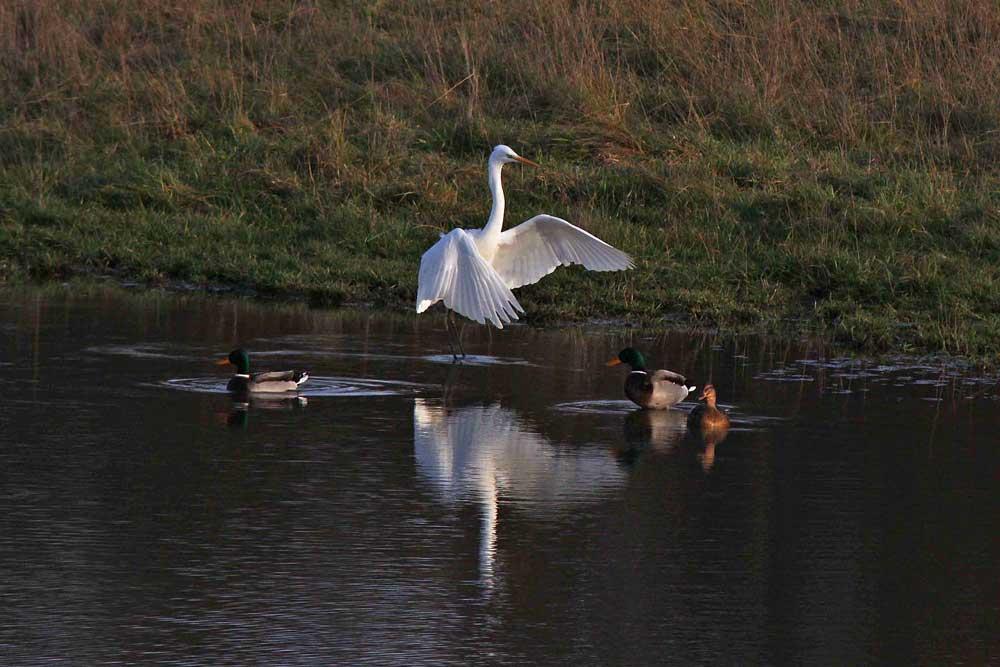 Spiegelbild in der Abendsonne..am 17.11.12 Foto: Gregor Zosel