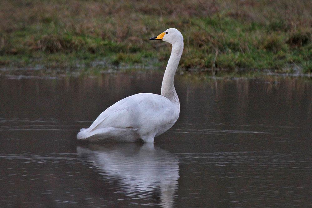 Mal ein Blick nach hinten kann nie schaden...am 26.12.12 Foto: Gregor Zosel