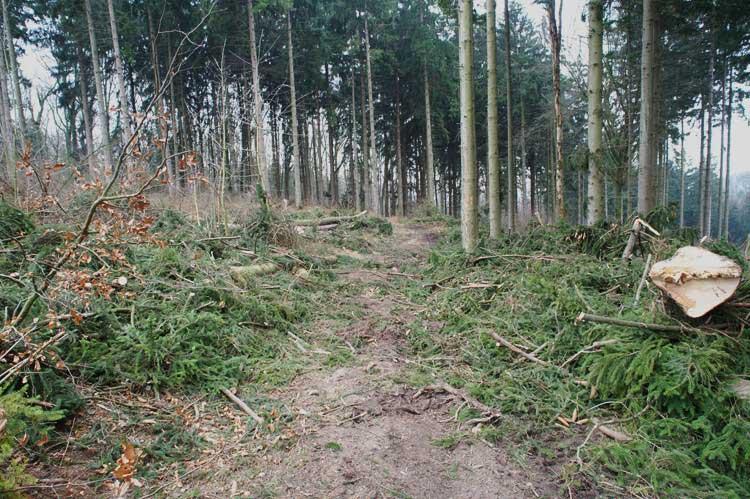 Waldarbeiten in der beginnenden Brutzeit bei Fröndenberg am 14.03.2012 Foto: Karl Heinz Beck Junior