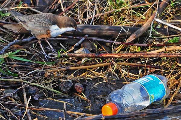 ...der andere räumt das Ufer auf... 29.12.2012 Foto: Marvin Lebeus
