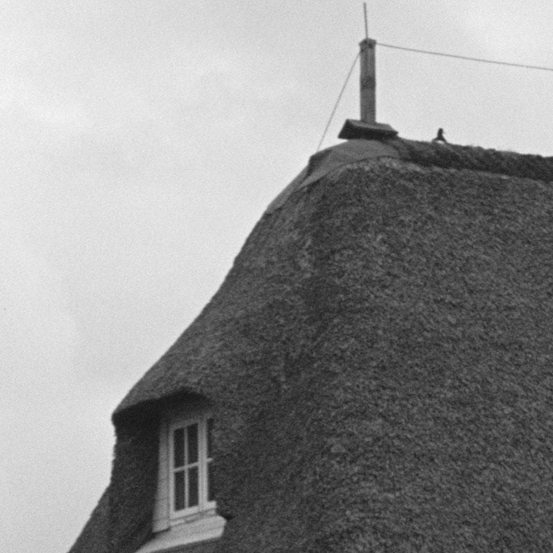Brutnachweis eines Austernfischers auf einem Reetdach auf Amrum 1972 Foto: Rolf Prothmann