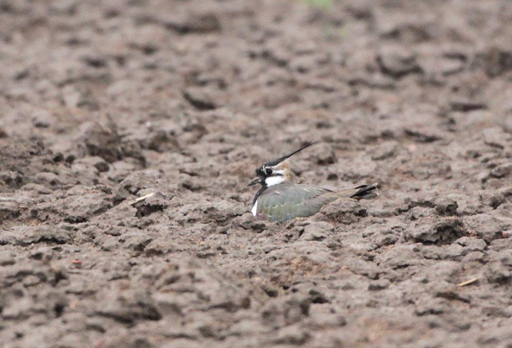 Einmal entdeckt - prägt man sich den Neststandort punktgenau ein..., 27.04.2013 Foto: Bernhard Glüer