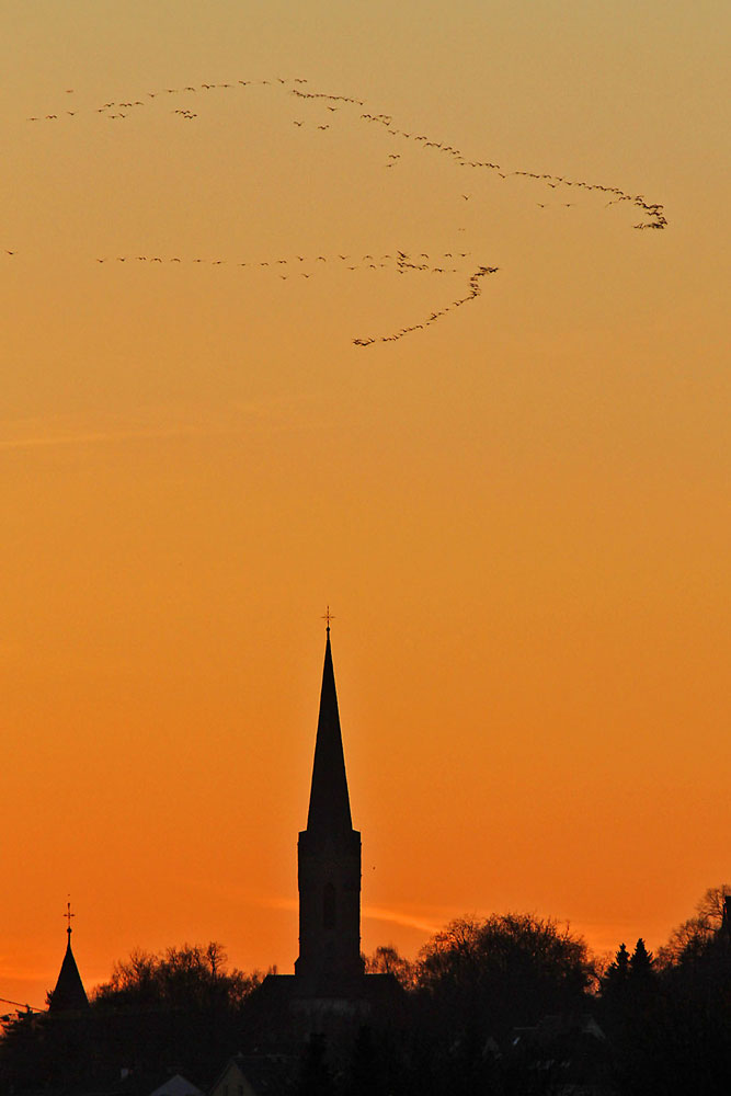 Kranichzug bei traumhaftem Sonnenuntergang über Fröndenberg...am 04.03.13 Foto: Gregor Zosel