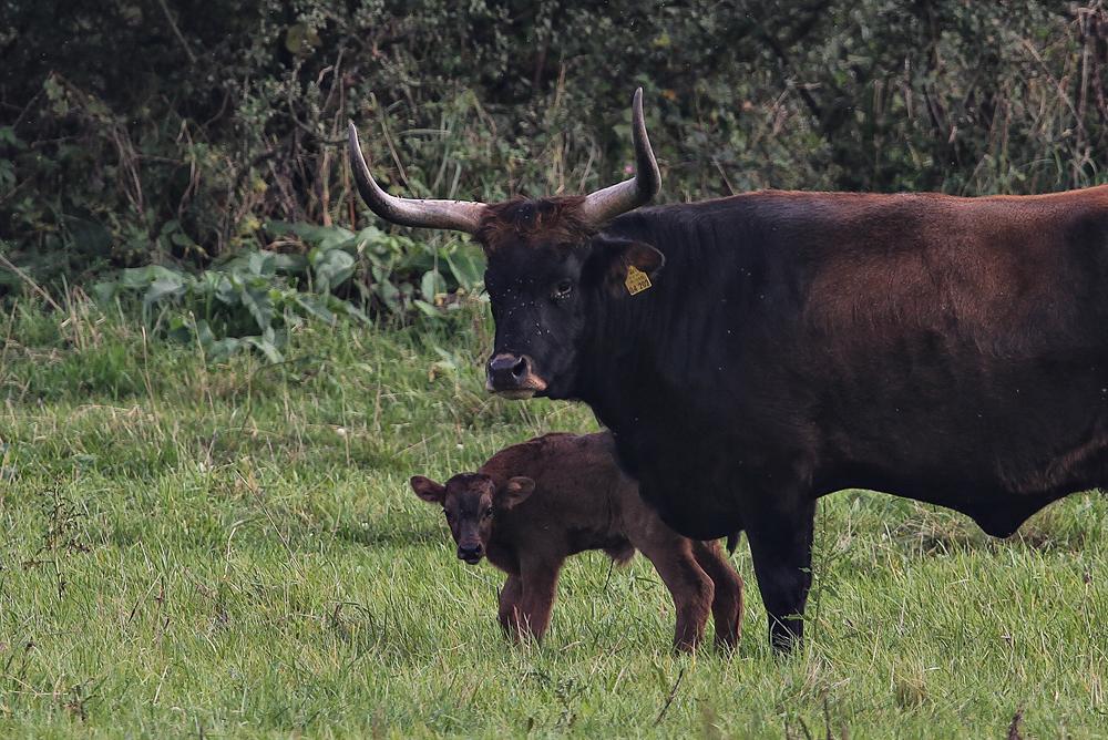 Junge Mutter mit Nachwuchs auf der Kiebitzwiese....am 23.09.13 Foto: Martin Wenner