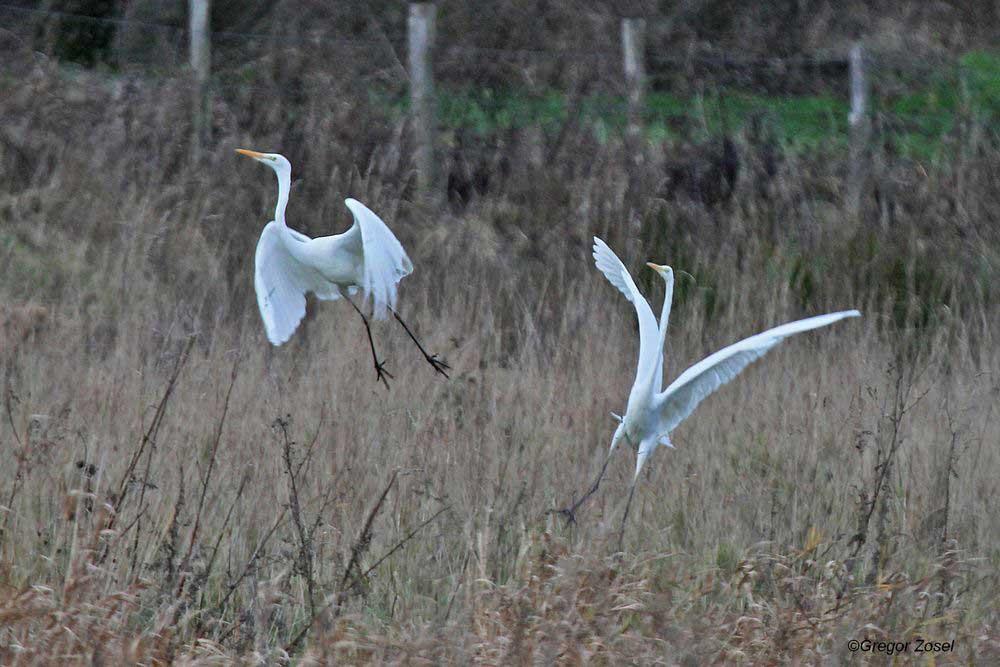 Abflug.....am 24.12.13 Foto: Gregor Zosel