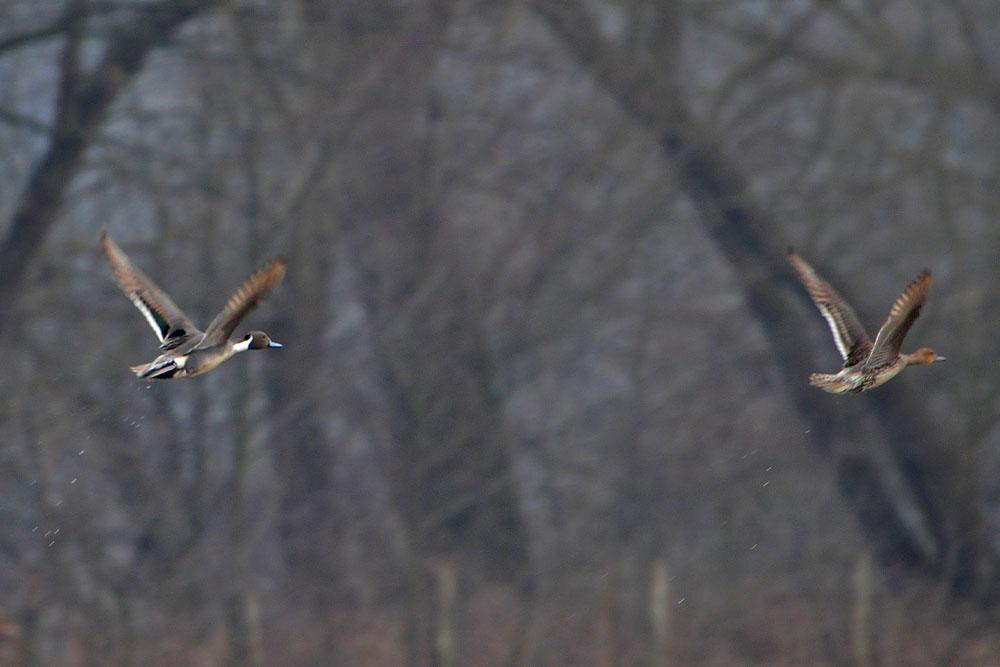 Abflug in Richtung Hammer Wasserwerk...am 29.03.13 Foto: Marvin Lebeus