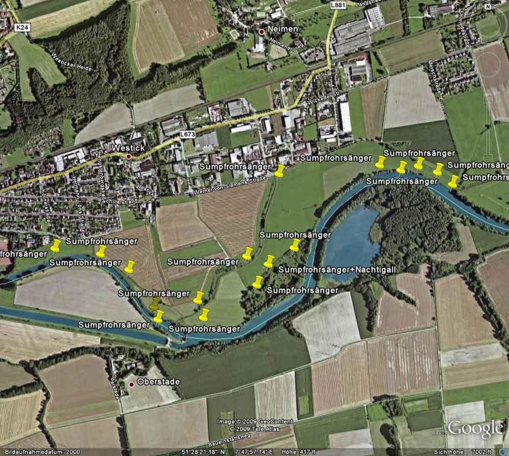 Im Vergleich nochmal die Sumpfrohrsängerreviere aus dem Jahr 2009, als die Kiebitzwiese noch nicht wiedervernässt war.....am 26.05.13 Foto: Gregor Zosel