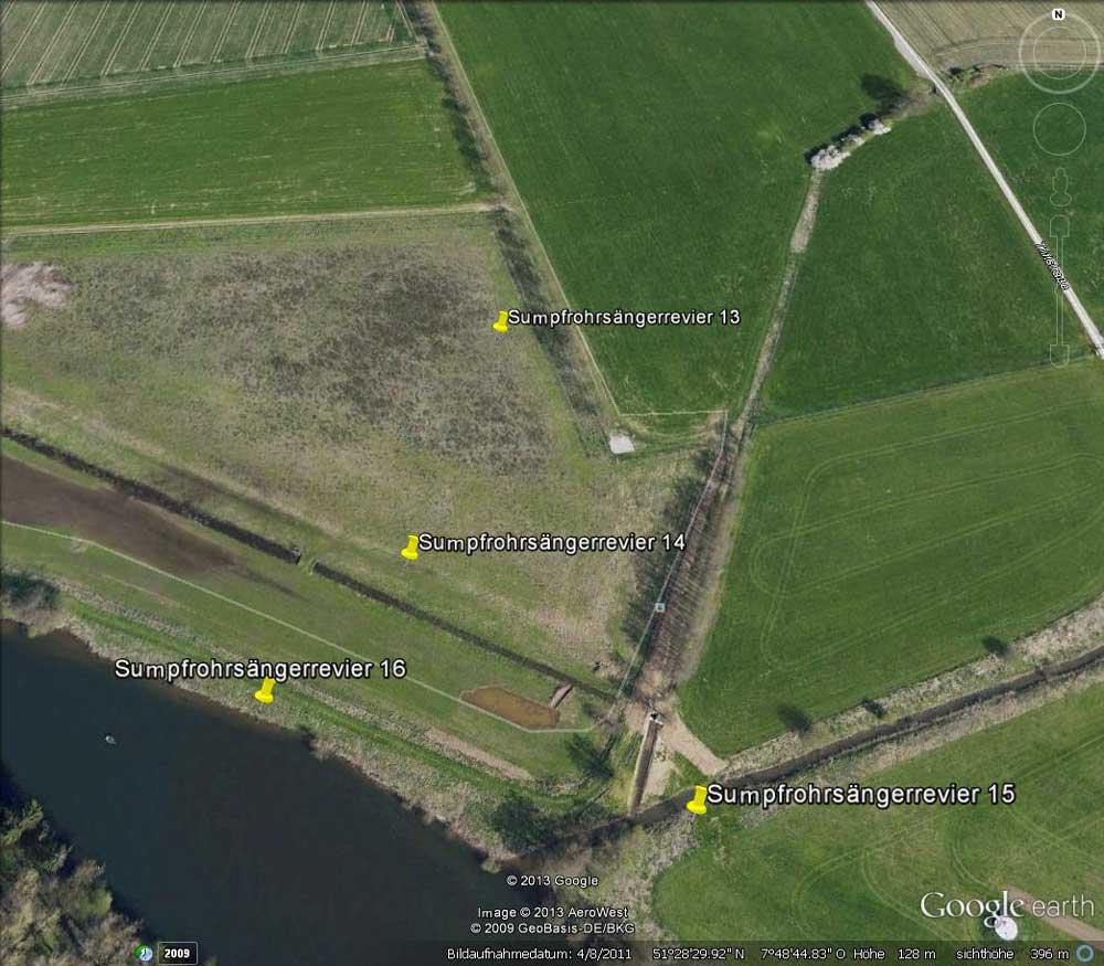 Sumpfrohrsängerreviere 2013 im Bereich der Ostgrenze der Kiebitzwiese mit Flößergraben und Rammbachmündung....am 26.05.13 Foto: Gregor Zosel