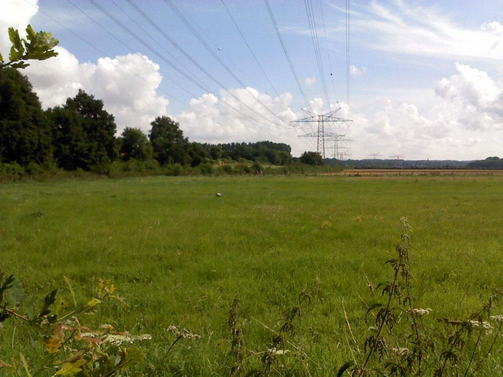 Nahrungssuchender Weißstorch in der Ruhraue an der Ortsgrenze Holzwickede/Fröndenberg am 29.07.2013 Handy-Belegfoto: Hans-Werner Lange