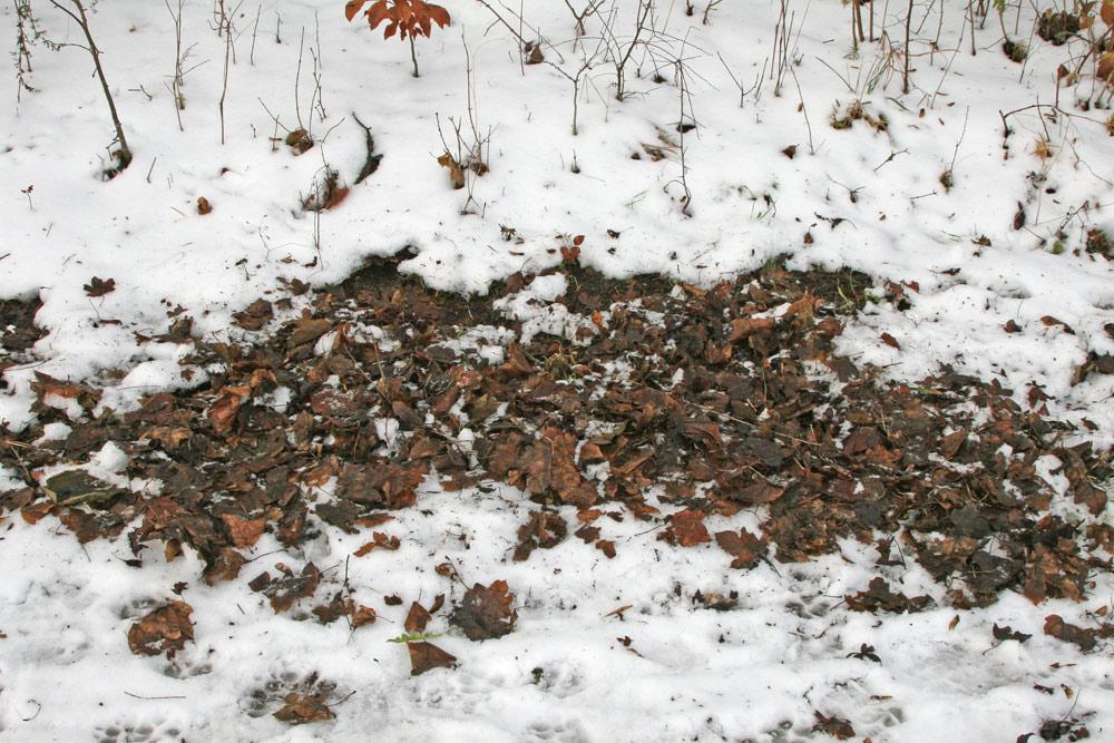 So sieht es aus, wenn eine Amsel nach Fressbarem gesucht hat: sie dreht praktisch alles `auf links´, 30.12.2014 Foto: Bernhard Glüer