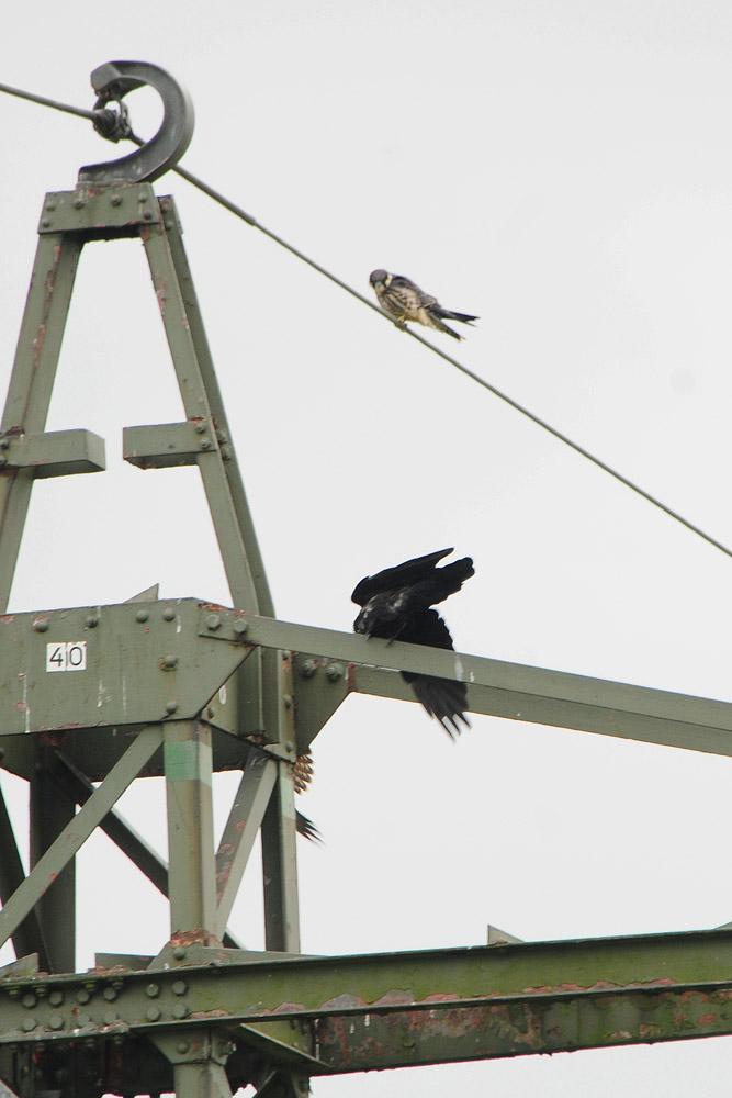 Immer wieder Streiten sich die Kontrahenten um den Strommast 40 am 04.09.2014 Foto: Marvin Lebeus