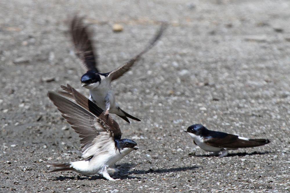 Da kommt es schon mal zu Streitgkeiten um den besten Mörtel....am 10.06.14 Foto: Gregor Zosel
