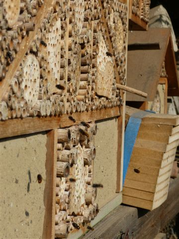 Mauerbienen an der Nisthilfe in Kamen am 14.03.2014 Foto: Heino Otten