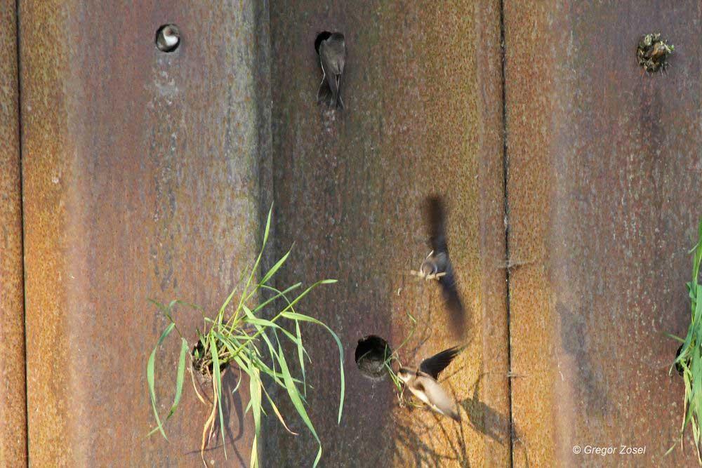 Nun wird wieder gebuddelt und störendes Material entfernt....am 01.06.14 Foto: Gregor Zosel