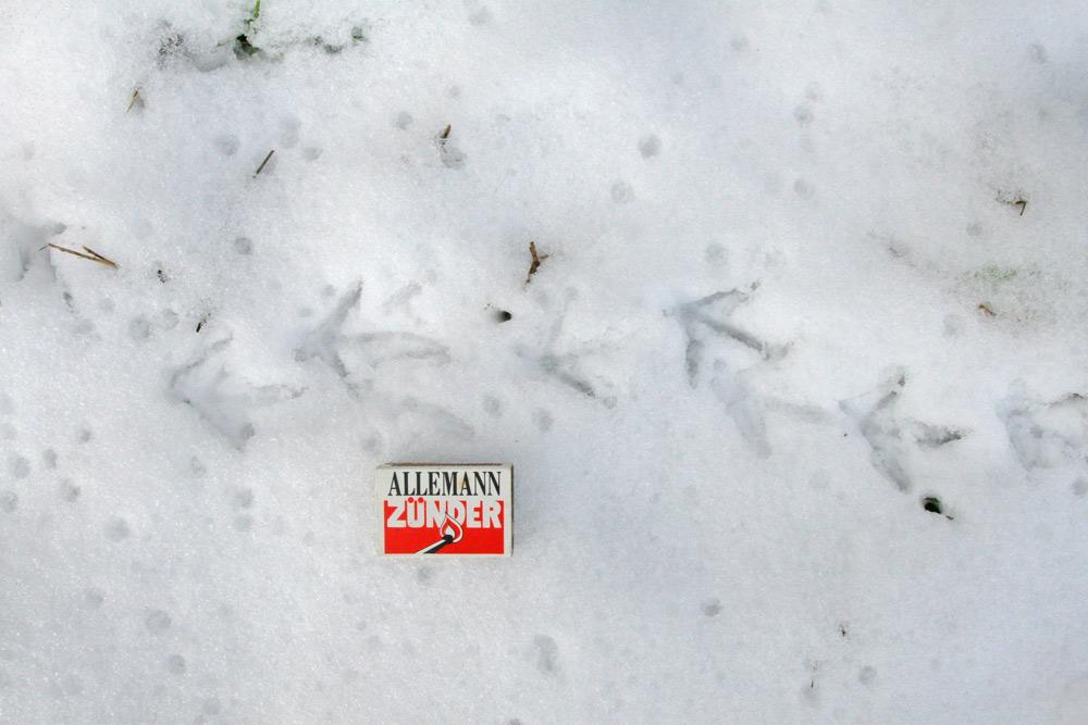 ...deutlich erkennt man die nur winzig ausgebildete Hinterzehe, 30.12.2014 Foto: Bernhard Glüer